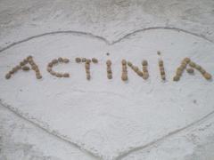 Actinia Accommodation B&B