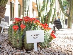 Courtyard Phoenix Mesa