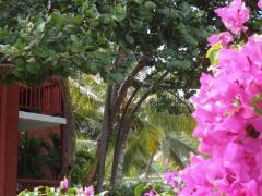 Hotel Palm Court